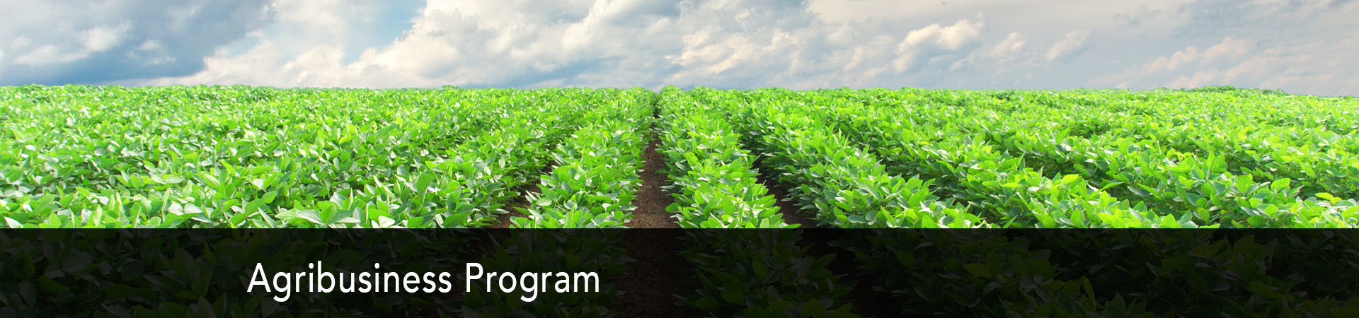 Explore the Agribusiness Program at NC